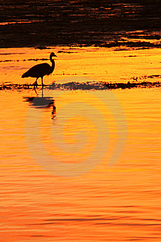 Heron At Sunset Royalty Free Stock Image - Image: 8243986