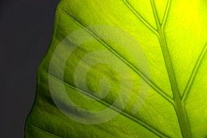 Grön Leaf För Detalj Royaltyfri Fotografi - Bild: 8252187