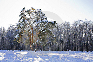 Winter Park Royalty Free Stock Images - Image: 8260289
