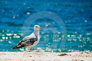 Seagull At Beach Stock Images - Image: 8263364