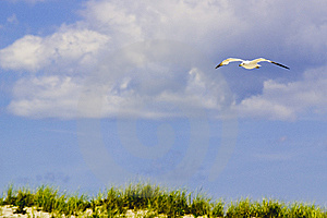 Soaring Seagull Stock Images - Image: 8263424