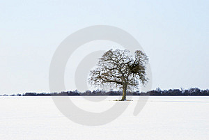 Isolated Tree Stock Image - Image: 8264581