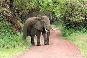 Elephant On Road Stock Photo - Image: 8265570