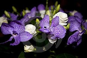 花束使玫瑰现虹彩 图库摄影 - 图片: 8265682