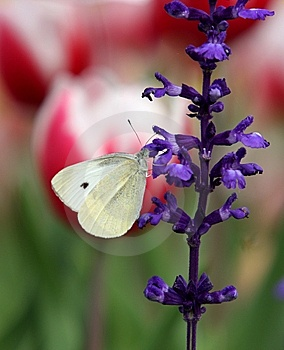 Flower & Butterfly Royalty Free Stock Photo - Image: 8269045