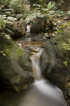 Rain-Forest Small Waterfall Stock Photography - Image: 8270262
