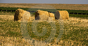 Hay Bales Stock Images - Image: 8270604