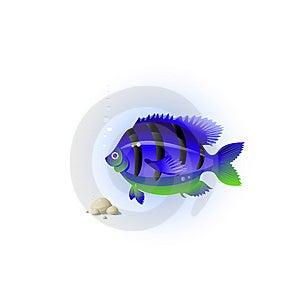 Fish Royalty Free Stock Photos - Image: 8270778