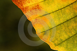 Yellow Leaf Royalty Free Stock Image - Image: 8276196