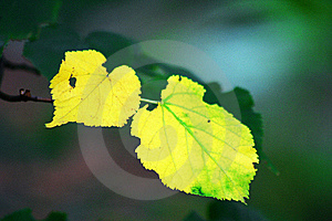 Yellow Leaf Stock Image - Image: 8276821