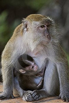 Mother Love Royalty Free Stock Images - Image: 8277919