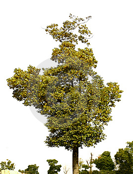 Tree Stock Image - Image: 8278771