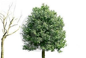 Trees Royalty Free Stock Photos - Image: 8281138
