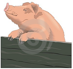 Porc Photographie stock - Image: 8287942