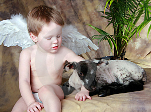 LIttle Angel And His Lamb Stock Photos - Image: 8289013