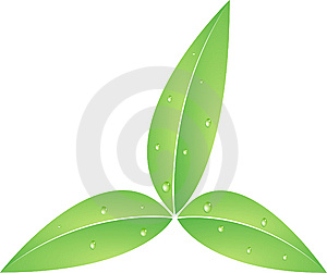 Leaves Whit Waterdrops Stock Photography - Image: 8289072
