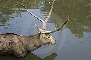 Deer Stock Photography - Image: 8290282
