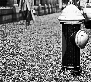 Fire Hydrant Stock Images - Image: 8293384