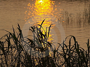 The Beautiful Sunset Meadow Waterside Royalty Free Stock Photos - Image: 8293558