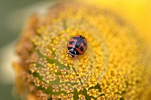 Ladybird Stock Photo - Image: 8297470