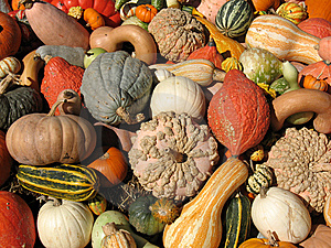 Harvest Stock Photos - Image: 8300183