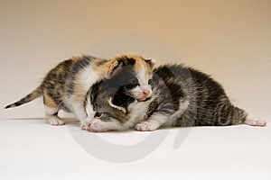 Small Cats Stock Photos - Image: 8301913