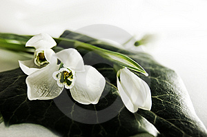 Fragile Flowers Royalty Free Stock Images - Image: 8303439