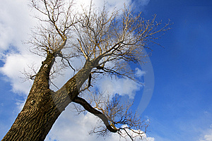 Bare Tree Stock Image - Image: 8304781