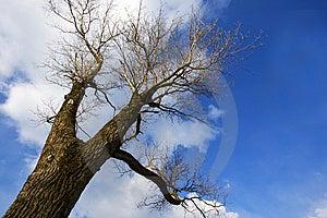 Bare Tree Stock Image - Image: 8304781
