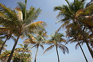 Palm Trees On Blue Sky Royalty Free Stock Image - Image: 8307996