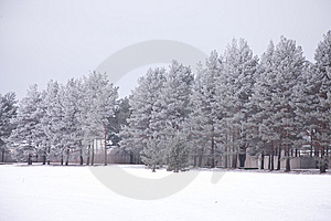 Trees, Winter Royalty Free Stock Images - Image: 8310149