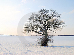 Winter Landscape Stock Photos - Image: 8310583