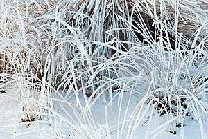 Frozen Plants Stock Photos - Image: 8318183