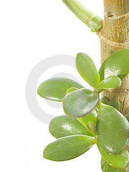 Wet Plant Royalty Free Stock Photography - Image: 8319737