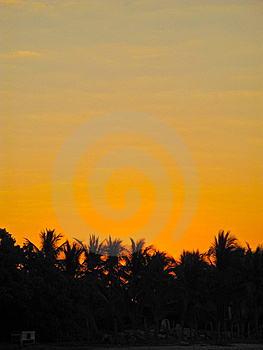 Sunrise Over Palm Trees Royalty Free Stock Photos - Image: 8322338