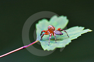 Spider Stock Images - Image: 8323464