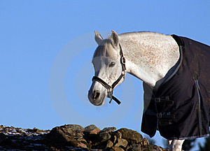Climbing Horse Royalty Free Stock Photo - Image: 8323835