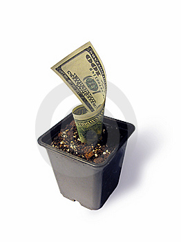 A Dollar Growing In A Flowerpot Royalty Free Stock Photography - Image: 8325477