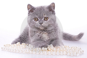 Little Kitty Stock Photos - Image: 8326183