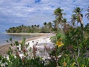 Caribbean Beach Stock Photo - Image: 8328260