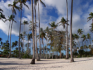 Palm Trees Forest Stock Photos - Image: 8328263