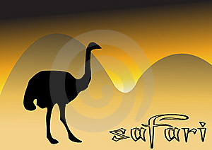 Ostrich In Safari Royalty Free Stock Photo - Image: 8333435