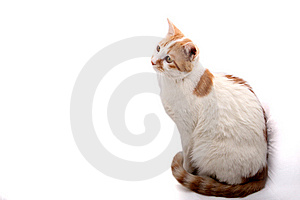 Cute Cat. Stock Image - Image: 8334551