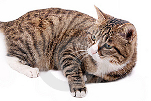 Cute Cat. Stock Photos - Image: 8335253