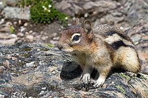 Squirrel Royalty Free Stock Image - Image: 8335656