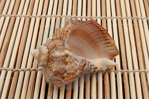 Rapa Shell On Wooden Background Stock Images - Image: 8337384