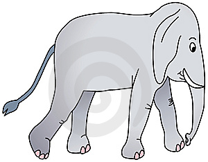 Walking Elephant Royalty Free Stock Image - Image: 8338556
