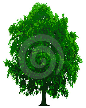 Vector Tree Royalty Free Stock Photo - Image: 8340355