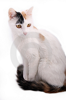 Cute Cat. Royalty Free Stock Image - Image: 8341776