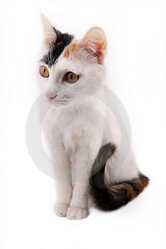 Cute Cat. Royalty Free Stock Photos - Image: 8343178